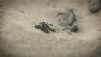 Oceana TV Spot, 'Save the Sea Turtles' Featuring Lauren Conrad - Thumbnail 5