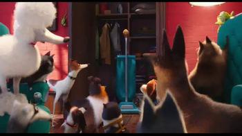 Thunder Shirt TV Spot, 'The Secret Life of Pets' - Thumbnail 3
