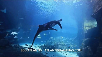 Atlantis Memorial Day Super Sale TV Spot, 'Book Now' - Thumbnail 6