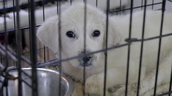 ASPCA TV Spot, 'Deplorable Conditions' - Thumbnail 2