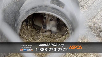 ASPCA TV Spot, 'Deplorable Conditions' - Thumbnail 3