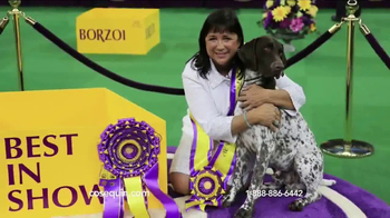 Cosequin TV Spot, 'Westminster Champion' - Thumbnail 4