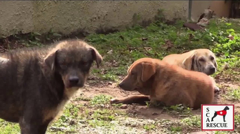 Second Chance Animal Rescue TV Spot, 'Hope & Heroes' - Thumbnail 3
