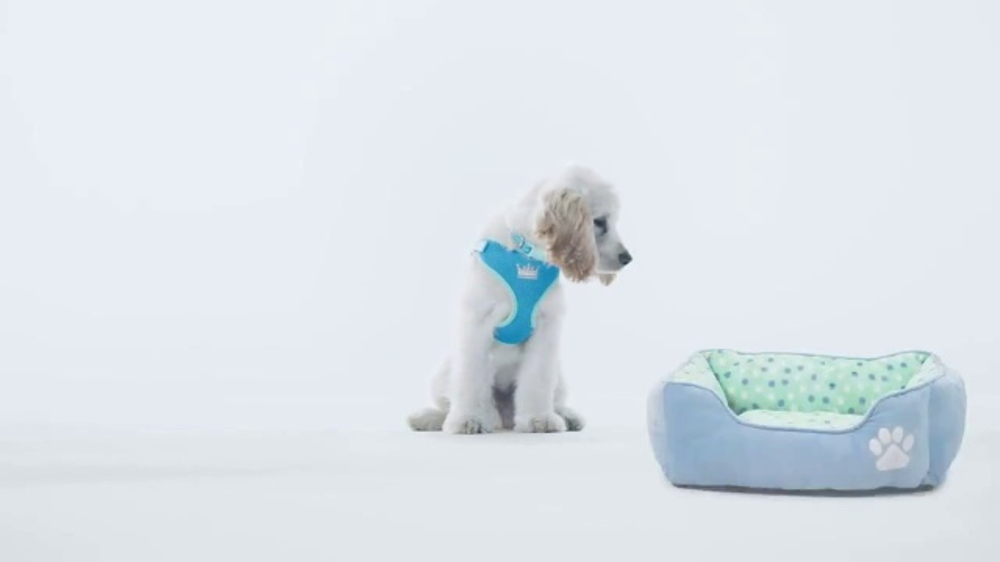 PetSmart Puppy Guide TV Commercial, 'Forever Home' Song by Queen - Video