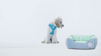 PetSmart Puppy Guide TV Spot, 'Forever Home' Song by Queen