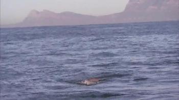 Oberto Beef Jerky TV Spot, 'Great White Shark' - Thumbnail 4