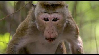 Monkey Kingdom Blu-ray and Digital HD TV Spot - 46 commercial airings