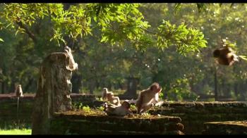 Monkey Kingdom Blu-ray and Digital HD TV Spot - Thumbnail 9