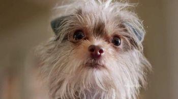 PetSmart TV Spot, 'Rivalries' Song by Queen