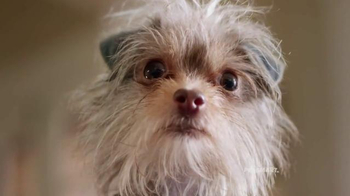 PetSmart TV Spot, 'Rivalries' Song by Queen - Thumbnail 7