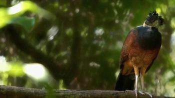 Belize Tourism Board TV Spot, 'A Curious Place: Birds' - Thumbnail 2