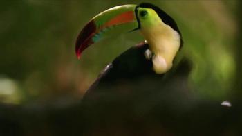Belize Tourism Board TV Spot, 'A Curious Place: Birds' - Thumbnail 4
