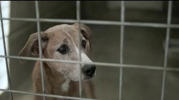 Pedigree TV Spot, 'Rescatada' [Spanish] - Thumbnail 3