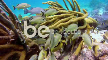 Travel Belize TV Spot, 'Discover How to Be: North Islands'