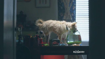 PetSmart TV Spot, 'Good Boy' Song by Queen