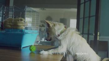 PetSmart TV Spot, 'Good Boy' Song by Queen - Thumbnail 3