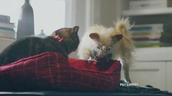 PetSmart TV Spot, 'Good Boy' Song by Queen - Thumbnail 4