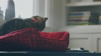 PetSmart TV Spot, 'Good Boy' Song by Queen - Thumbnail 5