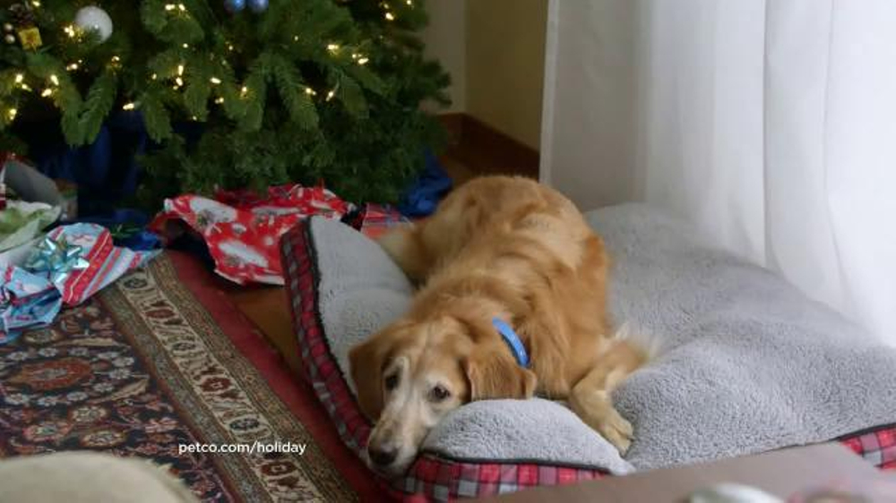 Petsmart Commercial Christmas 2020 PETCO TV Commercial, 'Archie'   iSpot.tv