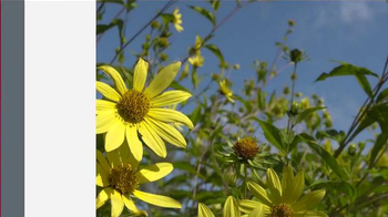 Washington State University TV Spot, 'WSU Stories: Master Gardeners'