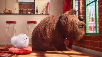 McDonald's Happy Meal TV Spot, 'The Secret Life of Pets: Where Do They Go?' - Thumbnail 1
