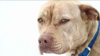 ASPCA TV Spot, 'End Dog Fighting'