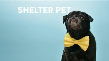 The Shelter Pet Project TV Spot, 'Hamilton Pug' - Thumbnail 7