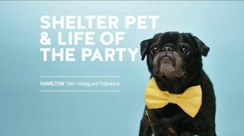 The Shelter Pet Project TV Spot, 'Hamilton Pug'