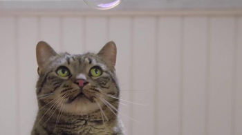 Purina Tidy Cats LightWeight 4-in-1 TV Spot, 'Bubbles' - Thumbnail 5
