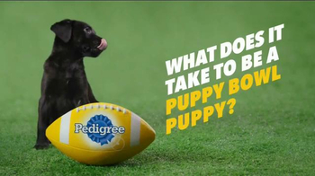 Pedigree Puppy TV Spot, 'Puppy Bowl Tryouts No. 2: Speed' - Thumbnail 1