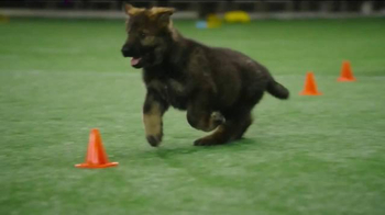 Pedigree Puppy TV Spot, 'Puppy Bowl Tryouts No. 2: Speed' - Thumbnail 4