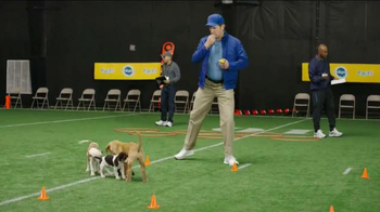 Pedigree Puppy TV Spot, 'Puppy Bowl Tryouts No. 2: Speed' - Thumbnail 7