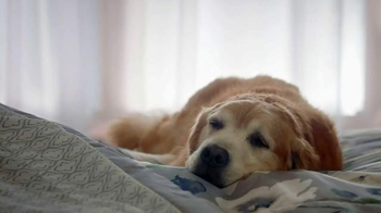 Kmart Home Sale TV Spot, 'Sleep Like a Dog' - 1819 commercial airings