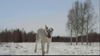 Purina Pro Plan Veterinary Diets FortiFlora TV Spot, 'Arleigh Reynolds' - Thumbnail 1