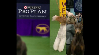 Purina Pro Plan TV Spot, 'Westminster Kennel Club Dog Show: Nine Years' - Thumbnail 2