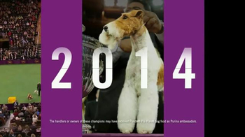 Purina Pro Plan TV Spot, 'Westminster Kennel Club Dog Show: Nine Years' - Thumbnail 4