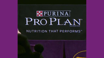 Purina Pro Plan TV Spot, 'Westminster Kennel Club Dog Show: Nine Years' - Thumbnail 6