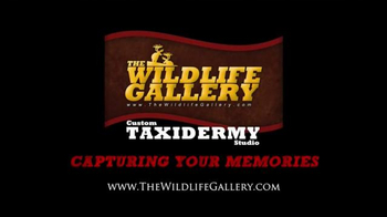 The Wildlife Gallery TV Spot, 'Taxidermy Time Lapse: Lion' - Thumbnail 7