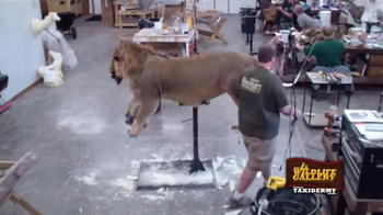 The Wildlife Gallery TV Spot, 'Taxidermy Time Lapse: Lion' - Thumbnail 2