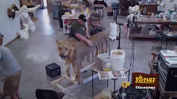 The Wildlife Gallery TV Spot, 'Taxidermy Time Lapse: Lion' - Thumbnail 3