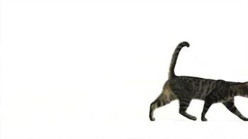 PetSmart National Adoption Weekend TV Spot, 'Change Your World' - Thumbnail 5
