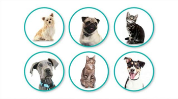 PetSmart National Adoption Weekend TV Spot, 'Change Your World' - Thumbnail 2