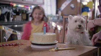 Banfield Pet Hospital TV Spot, 'Molly: Free Exam' - 242 commercial airings