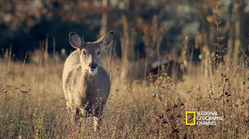 Subaru TV Spot, 'National Geographic Channel: Love Your Park' - Thumbnail 6
