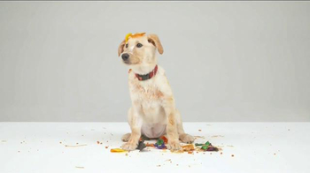 Bissell TV Spot, 'Pet Happens: Frosting' - Thumbnail 5