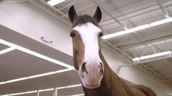 Budweiser Super Bowl 2016 Teaser, 'Act Like It: Clydesdale Beer Run' - Thumbnail 3