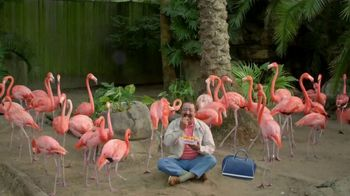 Popeyes $5 Butterfly Shrimp Tackle Box TV Spot, 'Soy flamingo' [Spanish] - 245 commercial airings