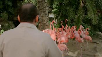 Popeyes $5 Butterfly Shrimp Tackle Box TV Spot, 'Soy flamingo' [Spanish] - Thumbnail 3