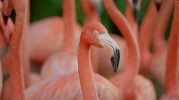 Popeyes $5 Butterfly Shrimp Tackle Box TV Spot, 'Soy flamingo' [Spanish] - Thumbnail 6