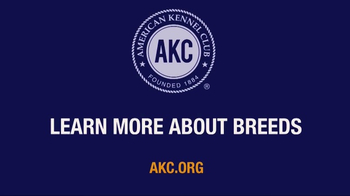 American Kennel Club TV Spot, 'The Right Breed' - Thumbnail 9